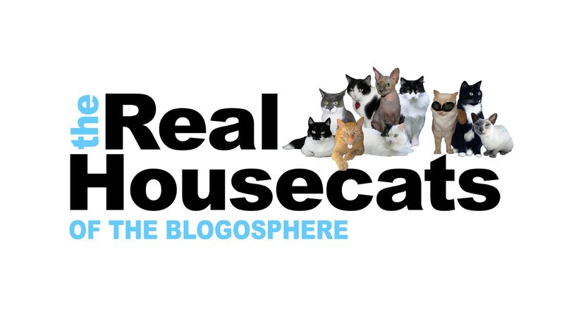Real Housecats
