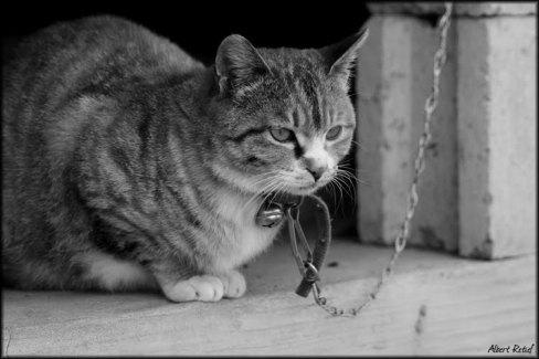Cat-chain