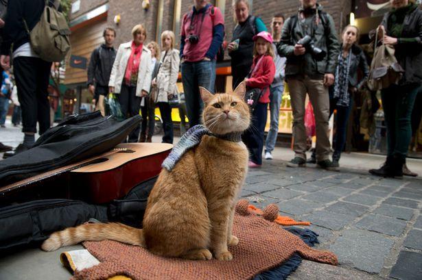 Street-Cat-Bob-2016464