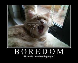 Cat bored