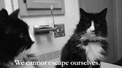 Cat existentialist