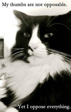 Opposing Cat
