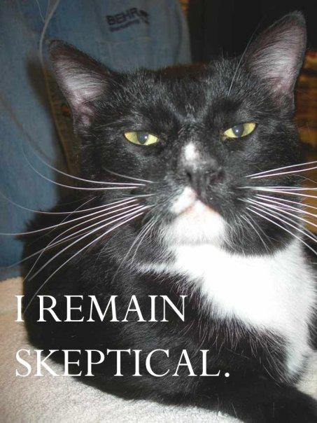 Pyrrhonian cat