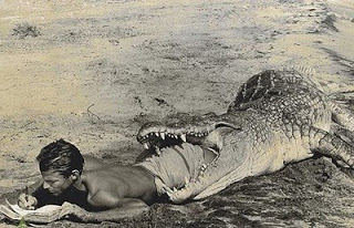 Nulla dies . . . alligator