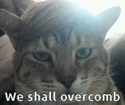 Trump cat