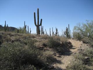Trail allure